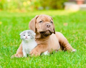 puppy & Kitten care in staten island